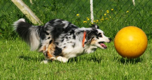 norrun® Ferkelball: großer Spielball für Ferkel # Antistreß #