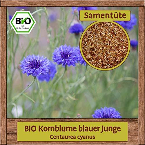 BIO Kornblume Samen Aussaat (Centaurea cyanus) Blumensamen Gute Bienen Pflanze Staude mit essbaren Blüten