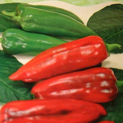 SANHOC Samen-Paket: Paprika Atris F1-1 Packung von seedsSEED