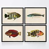 Nacnic Set de 4 láminas con pez Colorido Efecto Vintage Tono Azul Rojo Verde. Rasau. Composicion de ...