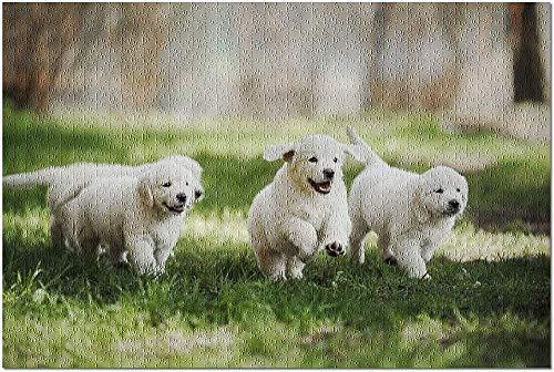 ZFSXmas Puzzle in Legno per Adulti e Bambini Cuccioli di Golden Retriever Che Giocano nell'Erba all'Esterno di A-Gioco Fai-da-Te Regalo Antistress per Bambini (1000 Pezzi)