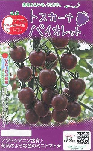 【種子】マウロの地中海トマト トスカーナバイオレット 約8粒
