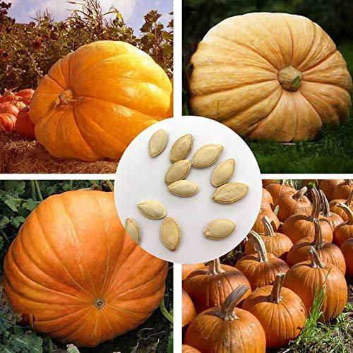 Semillas para plantar, 20 unidades/bolsa de semillas de calabaza deliciosas no transgénicos compactas gigantes para patio - semillas de calabaza