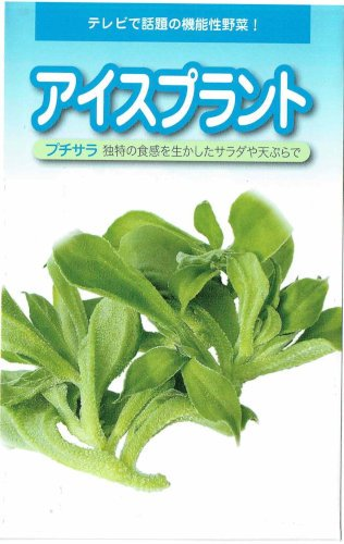 【種子】アイスプラント・プチサラ