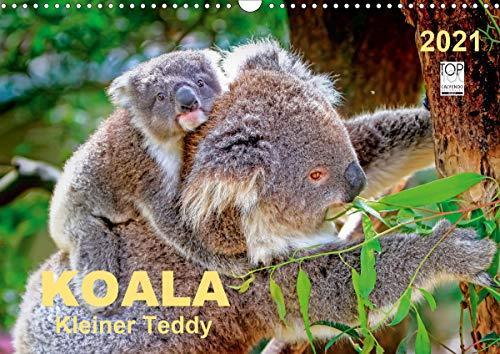 Koala - kleiner Teddy (Wandkalender 2021 DIN A3 quer)
