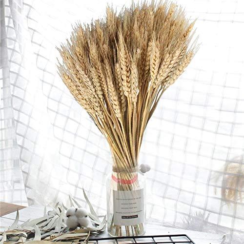 Rikey 100pcs Grandes Fleurs séchées de blé, Plantes de Jardin Couleurs primaires Naturelles Vrai blé pour Les décorations de Mariage