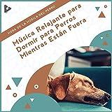 Mejor piano para perros