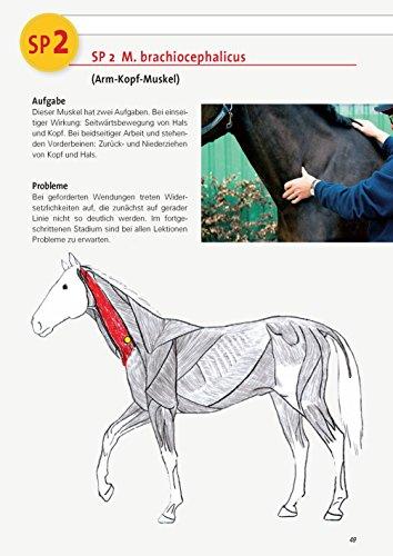 Triggerpunkt-Behandlung Teslau: Stresspunktmassage Jack Meagher Dry Needling