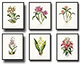 Botanical Print Set 6 Tropical Orchid Giclee Fine Art Prints - Unframed