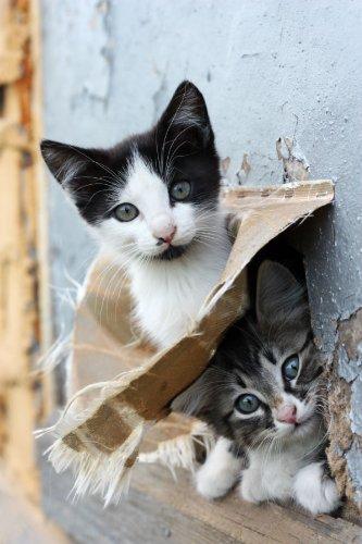 Vykortsserier djur (katter): Två nya kassar (10562)