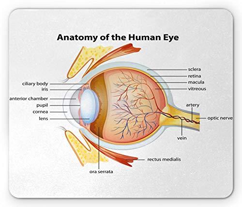 Mouse pad Mouse Mat Non-Slip Human Eye Anatomy Cornea Iris Pupils Optic Nerves Graphic Print Non-Slip Rubber Mousepad-9.8 X 11.8 inch