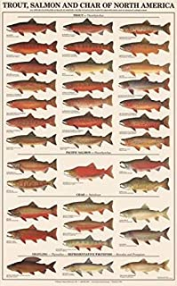 Best trout species poster Reviews