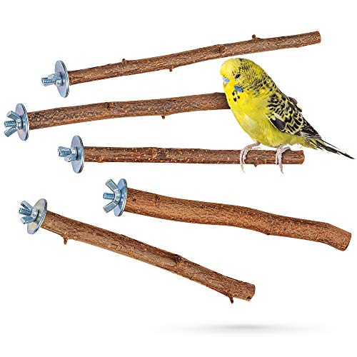Vogelgaleria -  5 herrliche Natur