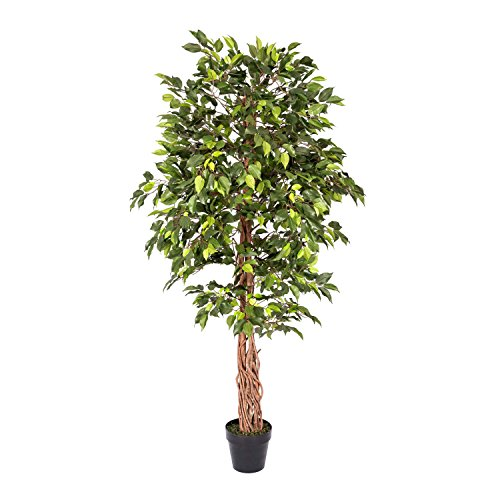 Homescapes - 6 Feet Ficus Tree - Green - Real Wood Stems and Lifelike Leaves Replica Artificial Plant