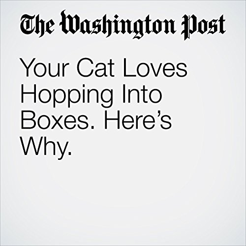 Your Cat Loves Hopping Into Boxes. Here's Why. copertina