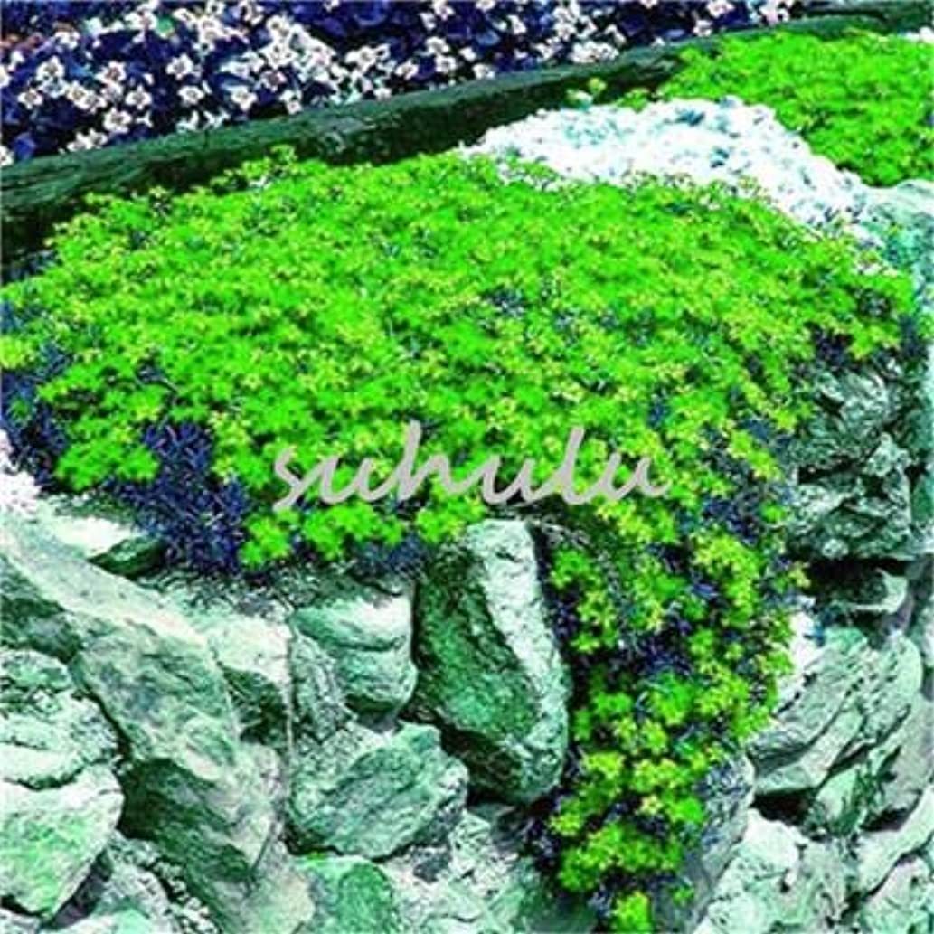 Hot 200 Pcs Thyme Seeds or rbow Rock Cress Seeds Ground Cover Natural Growth Home Garden Decoration