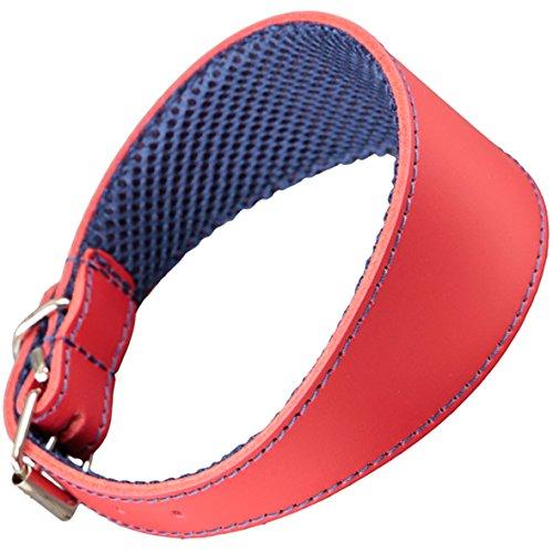 Arppe 195374535103 Collar Galgo Cuero Forro 3D Amazone, Rojo y Azul Marino