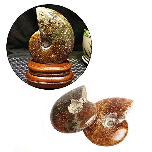 Wixine 2Pcs Natural Iridescent Ammonite Facet Specimen Fossil Madagascar Stone Gem