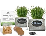 Organic Cat Grass Seeds Kit - Organic Seed & Soil for 3 Growing's. 2 x Rustic Wood Organic Wheatgrass Seeds Planters - Hairball Remedy for Cats, Healthy Pet Grass Supplement & Wheatgrass Growing Kit