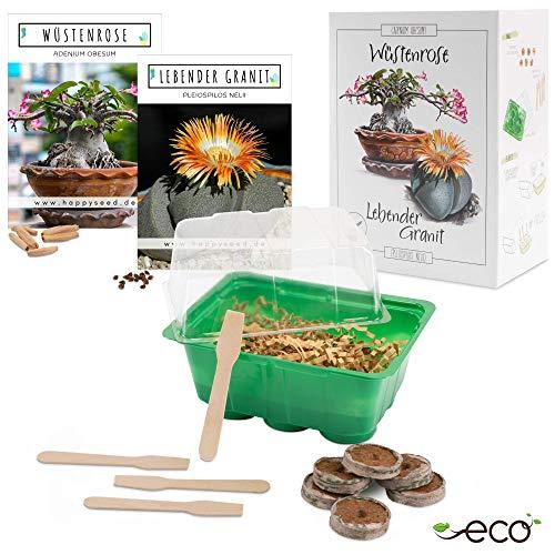 Kakteen Starter Kit Anzuchtset - Pflanzset aus Mini-Gewächshaus, Kaktus Samen & Erde - nachhaltige Geschenkidee für Pflanzenfreunde (Samen: Wüstenrose + Lebender Granit)