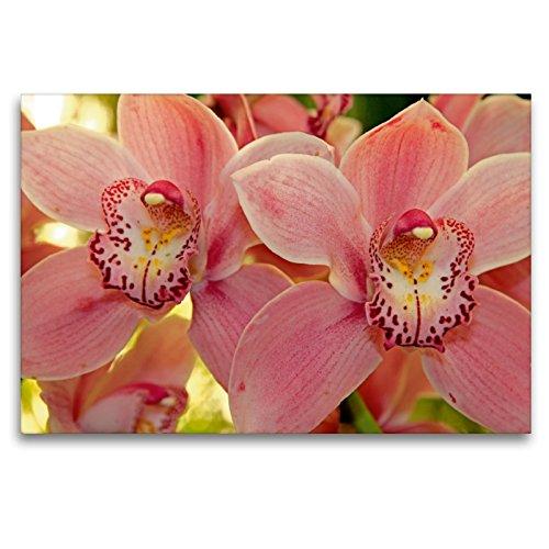Premium Textil-Leinwand 120 x 80 cm Quer-Format Orchideen | Wandbild, HD-Bild auf Keilrahmen, Fertigbild auf hochwertigem Vlies, Leinwanddruck von Klaus Lielischkies