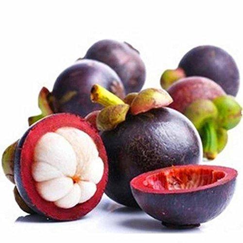 Tauser Samenhaus - 10 teile / beutel Mangostan Samen Garcinia Mangostana Rare Fruit Seeds Hausgarten...