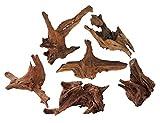 TM Aquatix MADERA DE ACUARIO DE MANGROVE (x1 PIEZA) - Tamaño de la raíz 20-30 cm (IWAGUMI AQUASCAPING BOGWOOD DRIFTWOOD)