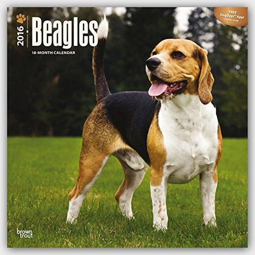 Beagles 2016 - 18-Monatskalender mit freier DogDays-App: Original BrownTrout-Kalender [Mehrsprachig]