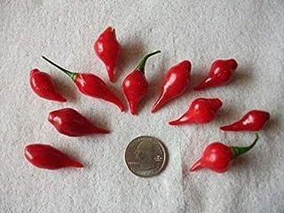 50+ Seeds Heirloom Organic Mild Biquinho Premium Pepper Seeds