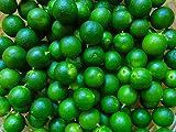 PLAT FIRM Germinazione dei Semi: Semi Calamansi Calamondin Lime 15 da Agricoltura Biologica Trasporto Libero!