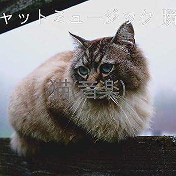 猫(音楽)