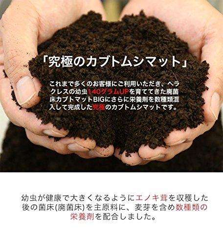 むしや本舗『廃菌床カブトムシマットスーパーBIG』