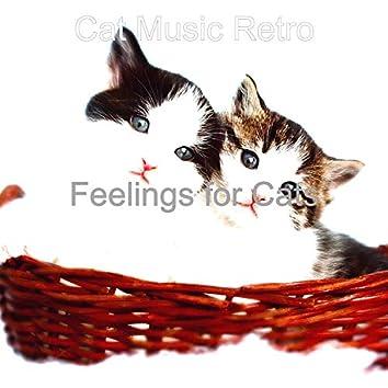 Feelings for Cats