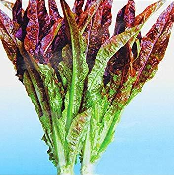 Vistaric Venta Caliente 50 unids semillas de Pepino Blanco DIY Home Garden Green Vegetable Seeds