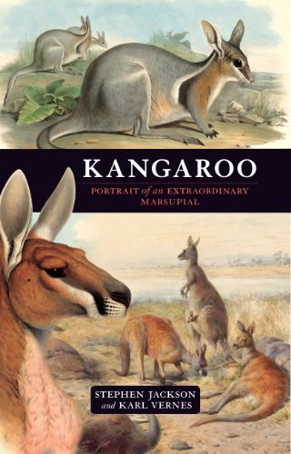 Kangaroo: A portrait of an extraordinary marsupial (English Edition)