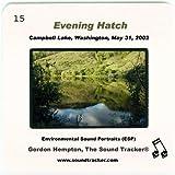 Evening Hatch (Campbell Lake, Washington, May 31, 2002)