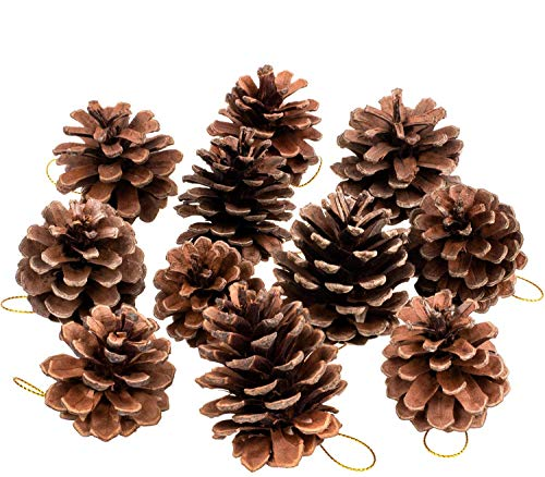 Whaline 25 Pcs Christmas Natural Pine Cones, Rustic Pinecones Bulk Ornaments with String for Crafting for Home Accent Decor, Fall Thanksgiving Tree Decoration (1.6-2.4 Inches)