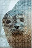 Rompecabezas de madera de 500 piezas Cavalier King Charles Spaniel Perro Animales Retrato Divertido y desafiante Rompecabezas de mesa Juego Juguetes Regalo Decoración para el hogar-Puzzle5