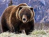 HOOBBI 1000 pcs Puzzle para Adultos Rompecabezas Oso Grizzly Grande en Las Montañas Rocosas canadienses educativos para niños Puzzle Game para