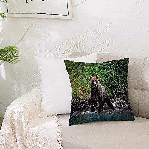 Zierkissenbezug- ohne Füllung-Grizzly Braunbär im See Alaska unberührten Wald Dschungel Wildlife I,Zierkissenhülle Dekorative Kissenbezug Dekokissen Kissenhülle mit Verstecktem Reißverschluss 50x50 cm
