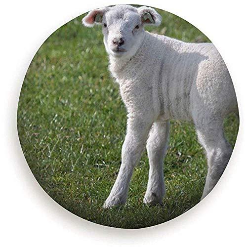 Beck Roy topsaleA Young White Texel Schafe auf Gras Tiere Wildlife Landwirtschaft Natur Reserverad Reifenabdeckung Wasserdicht Staubdicht Universal