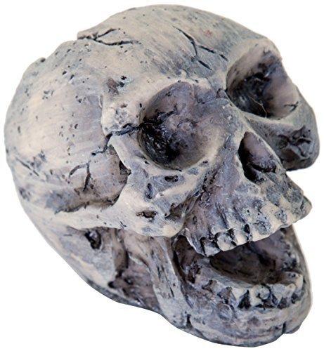 BioBubble Origins Human Skull Ornament, Small, Multicolor by BioBubble Pets, inc.