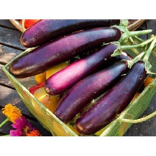 Eggplant Rare Purple Long Eggplant Organic Vegetable seeds for home garden plant
