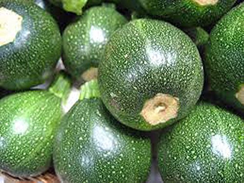 Graines de courgette, courge ronde, Heirloom, Bio, Graines 100+, non ogm, légumes santé