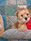 IMG-2 pezzoli shop copridivano cuccioli trapuntato