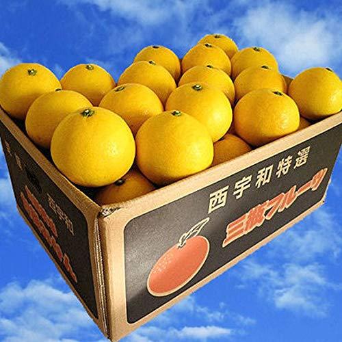 日向夏 4.5kg×2箱(訳あり・家庭用)ニューサマーオレンジ 農園直送 別名 小夏 ひゅうがなつ ニューサマー みかん