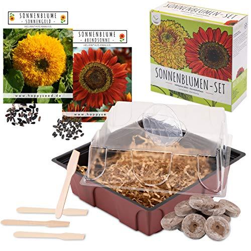 Sonnenblumen Anzuchtset - Pflanzset aus Mini-Gewächshaus, Sonnenblumen Samen & Erde - nachhaltige Geschenkidee für Pflanzenfreunde (Abendsonne + Sonnengold)