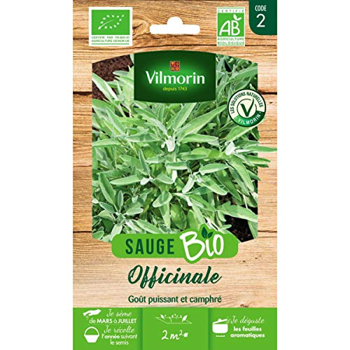 Vilmorin Sachet graines Sauge Officinale Bio - Salvia officinalis