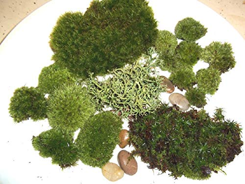 Live Moss Assortment for Terrariums