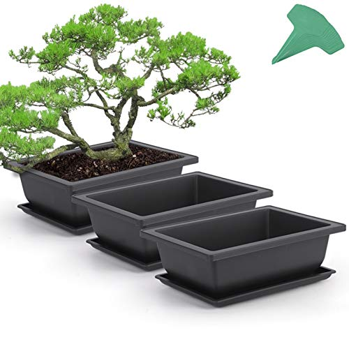 GROWNEER 3 Packs 9 Inches Bonsai Training Pots with 15 Pcs Plant Labels, Plastic Bonsai Plants Growing Pot for Garden, Yard, Office, Living Room, Balcony and More